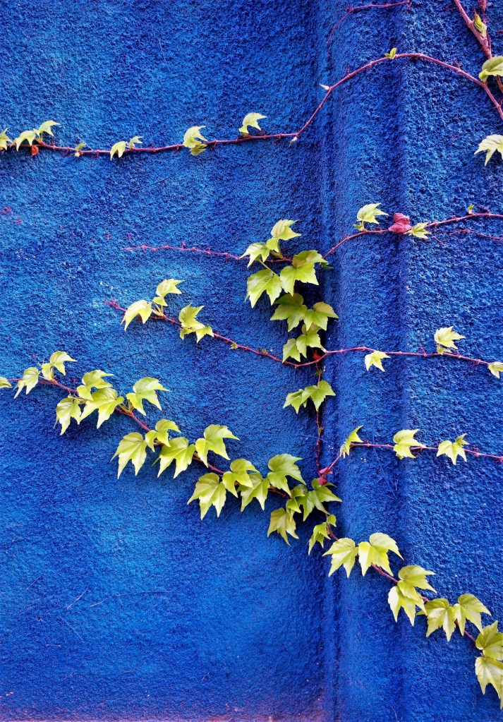 Ivy on the blue wall. ©Shorena Ratiani Photography