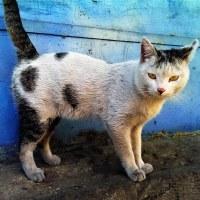 Street Cat Show
