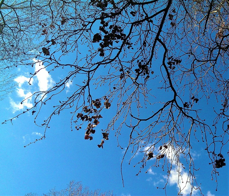 Autumn leaves against blue sky. ©Shorena Ratiani Photography