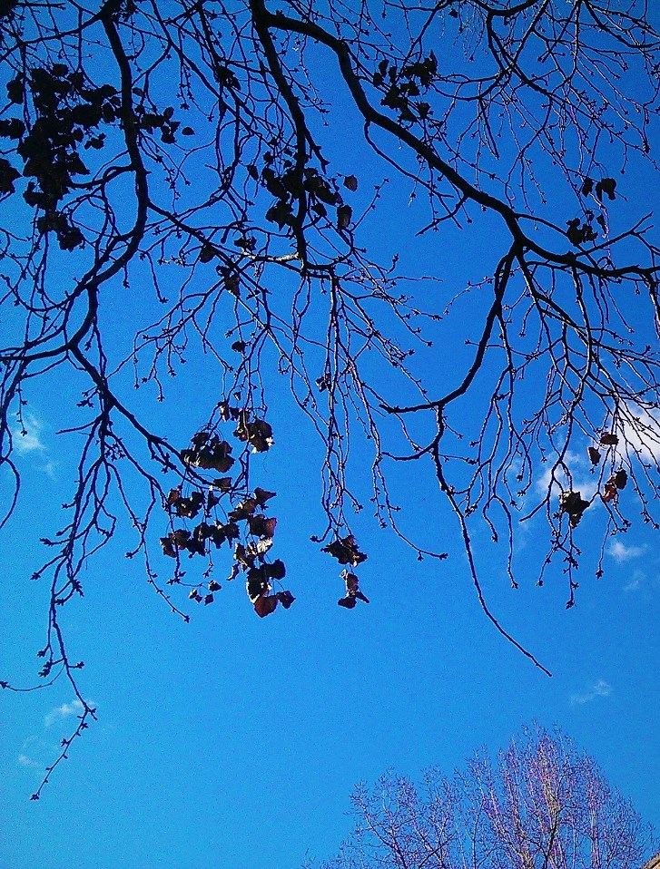 Autumn leaves against blue sky. ©Shorena Ratiani Photography