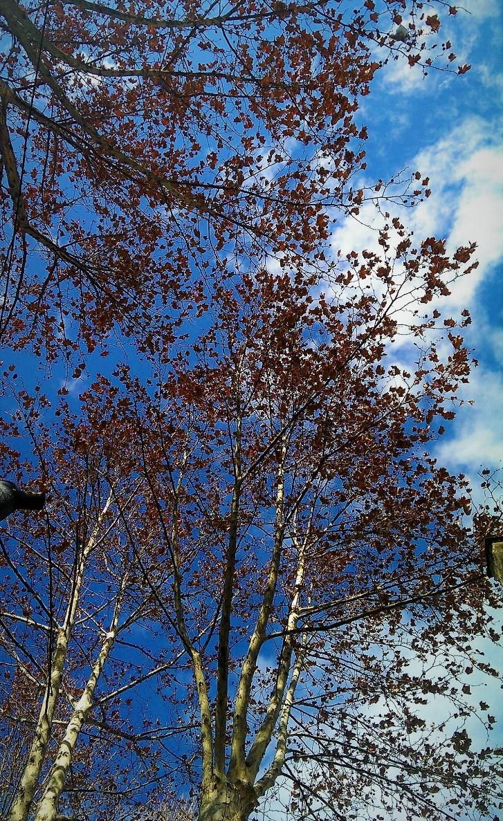 Autumn leaves ©Shorena Ratiani Photography