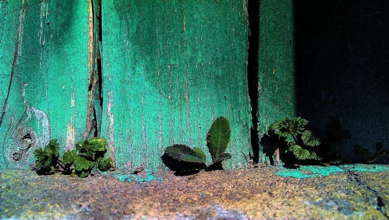 Tiny life. © Shorena Ratiani Photography