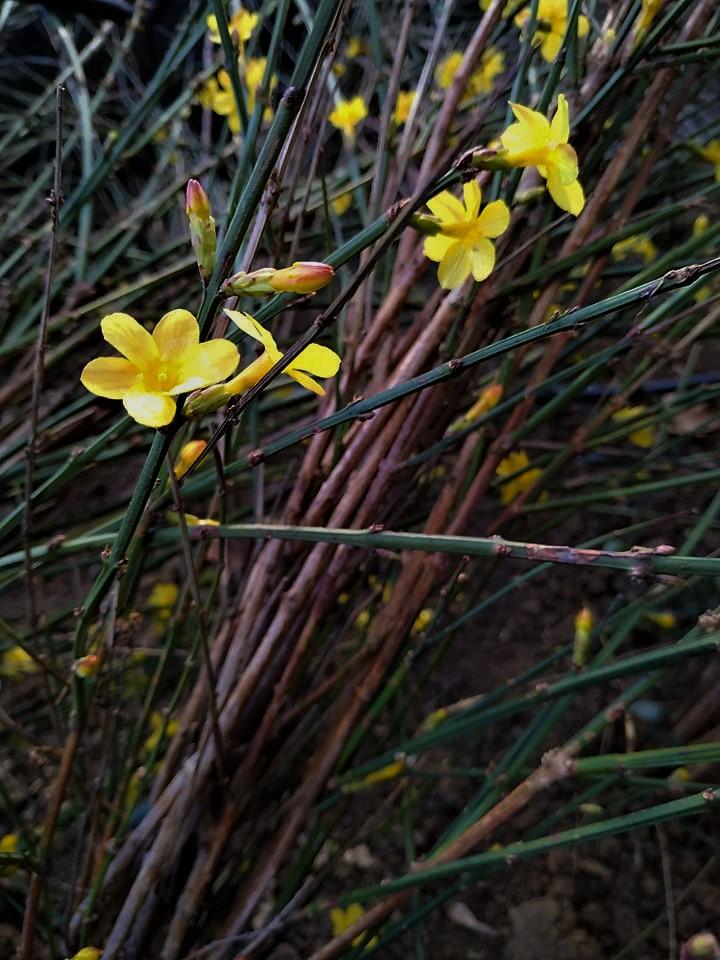 Spring flowers. ©Shorena Ratiani Photography