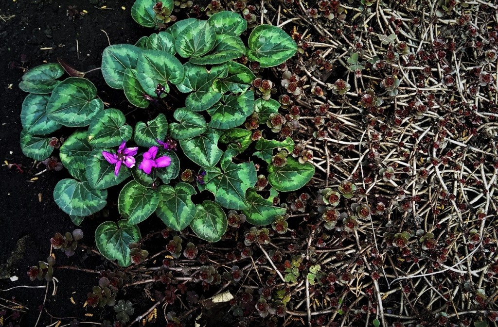 Violets. © Shorena Ratiani Photography