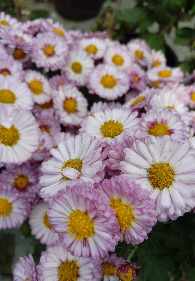 Daisy The Beginning Of A New Day Shorena Ratiani If you have an issue with one of our products, there are several ways to get help. shorena ratiani